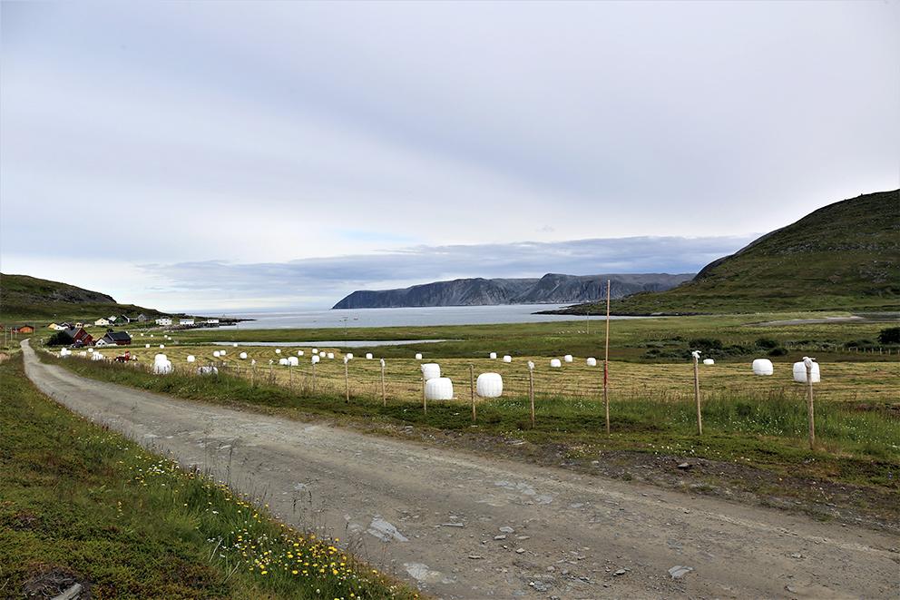 Slåttonn i Skjøtingberg sommeren 2021. Det er Yngve Akselsen fra Brenngam som slår jordene. Han har rundt 200 sauer i Brenngam. (Foto: Bjørn Roald Lillevik)